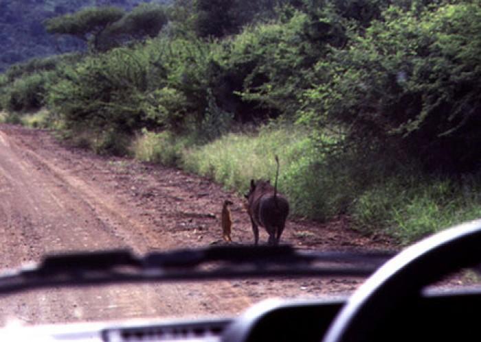 Timone and Pumba